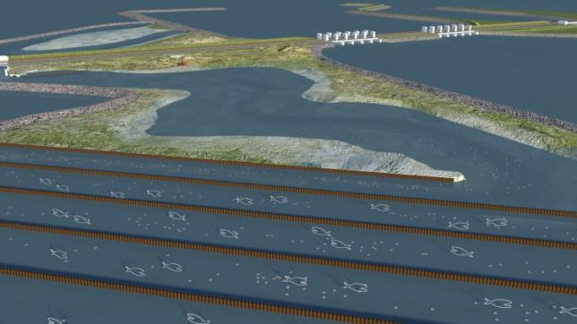 Animatie blije vissen Vismigratierivier Afsluitdijk
