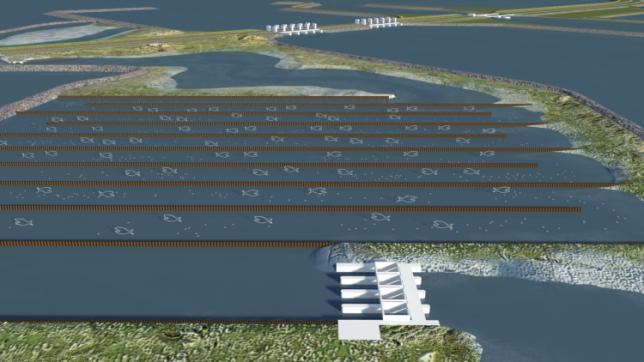 Animatie blije vissen in de Vismigratierivier Afsluitdijk