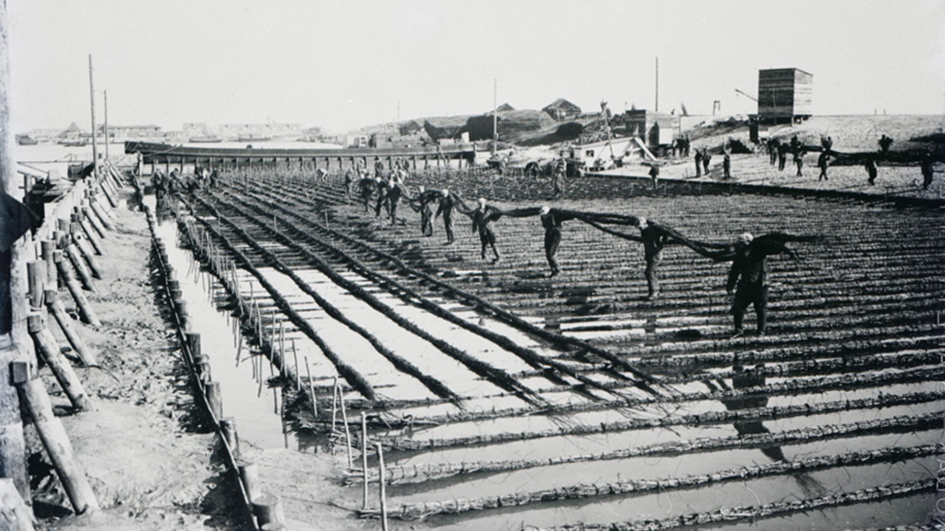 Oude foto van werkzaamheden op de Afsluitdijk. Op deze foto is de opbouw van de Afsluitdijk te zien. Links zie je mannen die wiep op de plek leggen. De velden zijn nat.