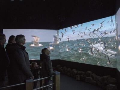 Voorstelling in het Afsluitdijk Wadden Center over de Nationale Waterdag. Er staan een paar mensen te kijken naar drie schermen. Op de schermen zie je een film. Nu zie je zeemeeuwen.