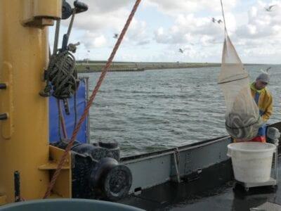 Op de foto zien we een boot met twee palingvissers.