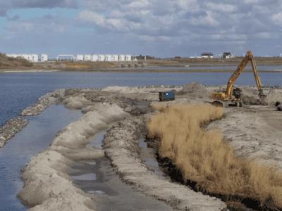 nieuwe rietoever bij de Afsluitdijk